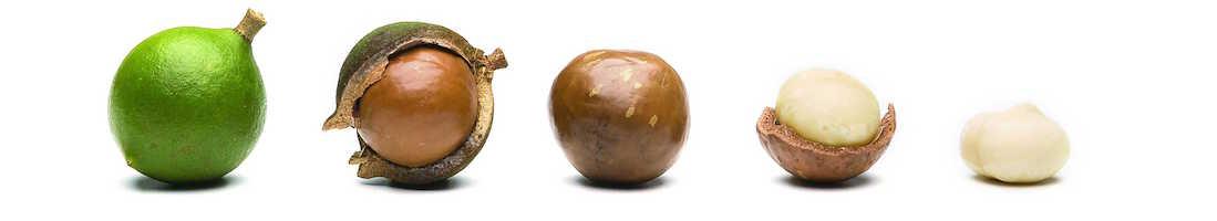 Olio di macadamia (Pianta di noci) - Fard naturali Defa Cosmetics