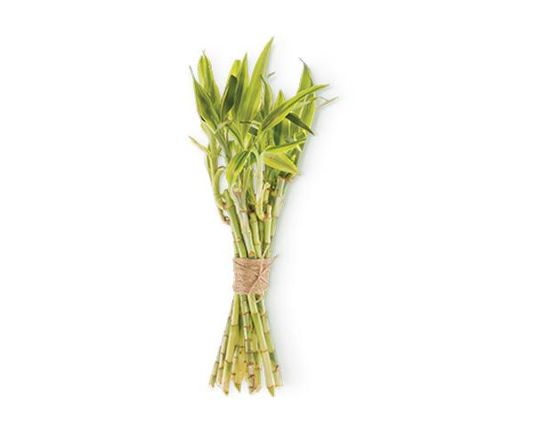 Bambusa arundinacea - ombretti vegan e naturali Defa Cosmetics