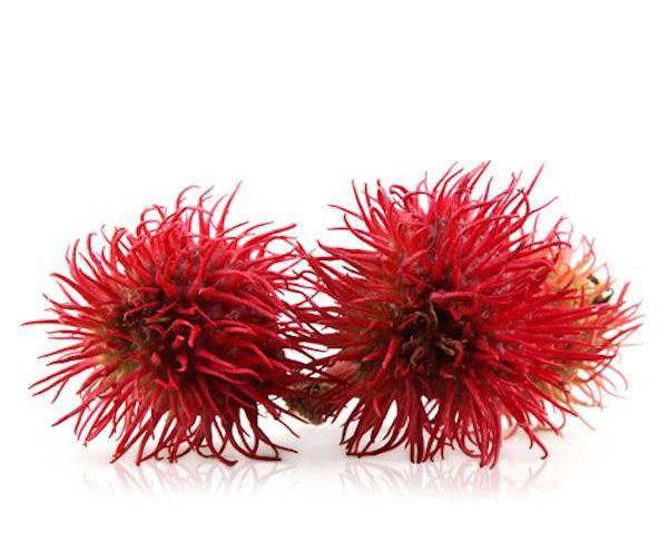 Olio di ricino - rossetti opachi vegan e naturali Defa Cosmetics